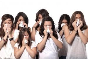 Filter ne hunde zgjidhja per alergjite