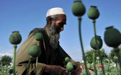 Afganistan, SHBA dështon në luftën ndaj opiumit