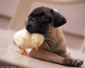 Miqësia e rrallë mes zogut dhe qenit