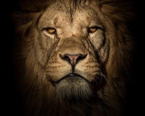 Imazhe mahnitëse nga bota e kafshëve