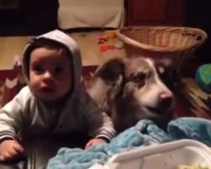 """E rrallë / Qeni thërret """"mama"""""""