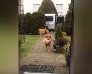 Ja qentë që bëjnë pazar (Video)