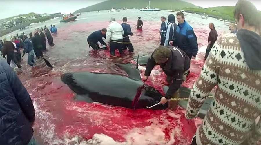 balenat