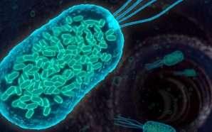 Në trupin e njeriut jetojnë mijëra baktere