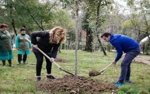 Mbjellja e pemëve, nismës i bashkohen edhe artistë