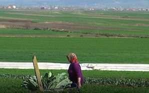 Nuk ndryshon kompensimi i TVSH-së në bujqësi