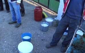 Fabrikat refuzojnë grumbullimin e qumështit