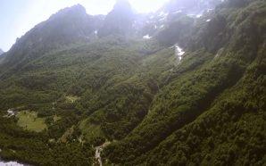 Ashpërsohen penalitetet për dëmtuesit e pyjeve