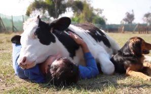 """""""Kafshët nuhasin gjendjen shpirtërore të njeriut"""""""