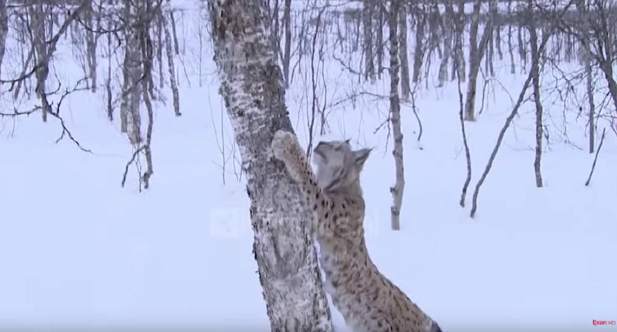 Rishfaqet rrëqebulli  zbulohet një familje në pyjet e Librazhdit
